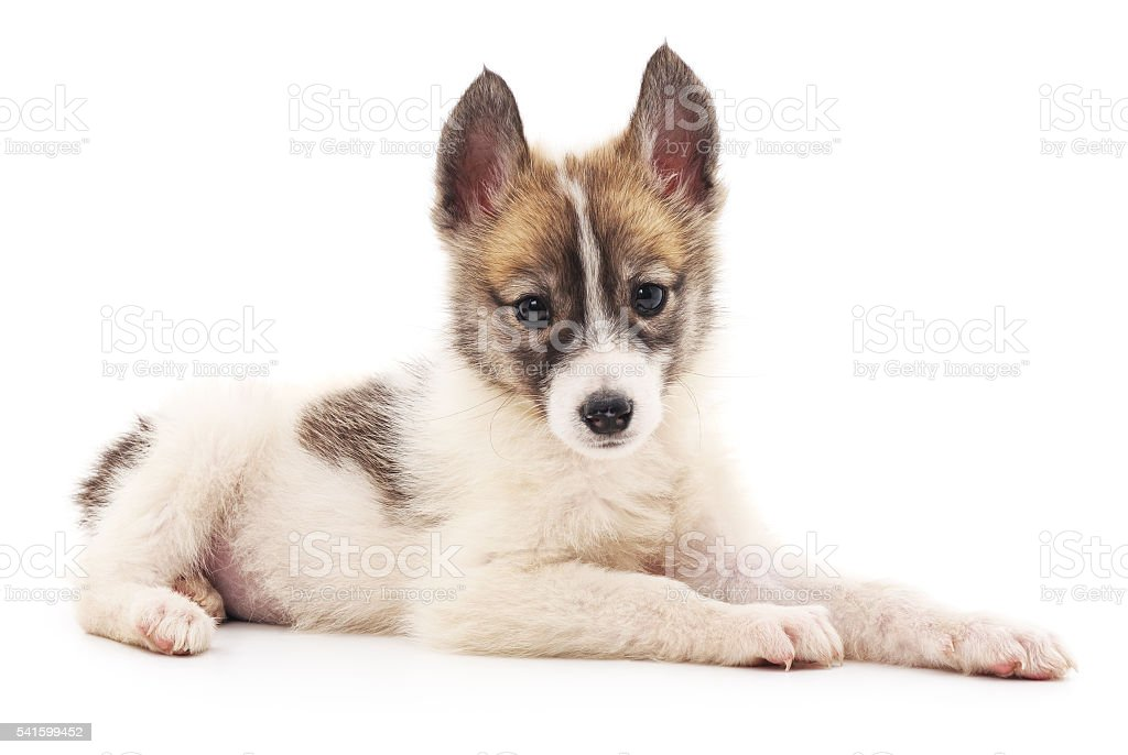 Little dog. stock photo