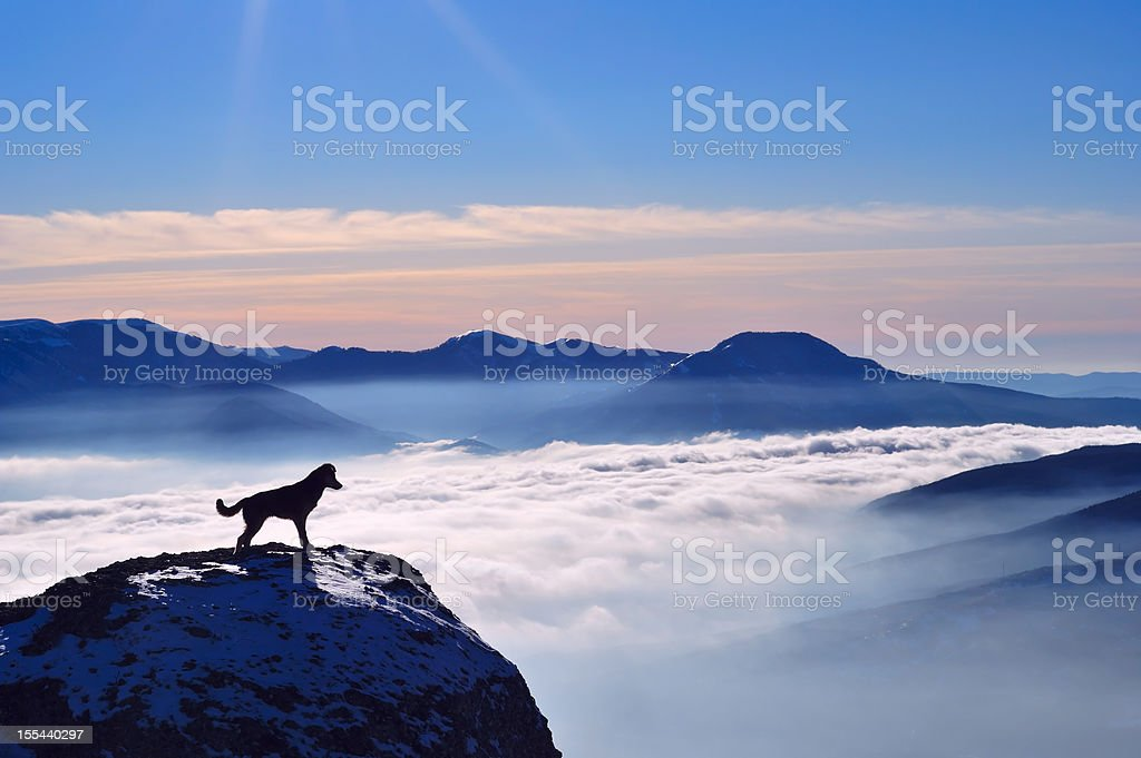 Little dog standing on the edge of rock stock photo
