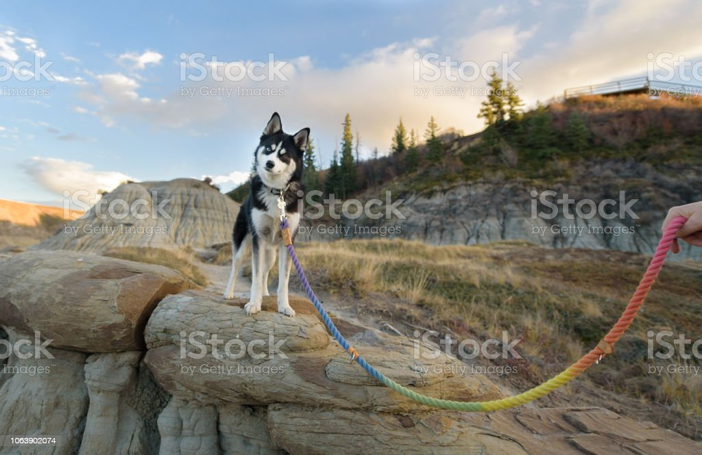 Little dog with head tilt looking at camera in a beautiful setting stock photo