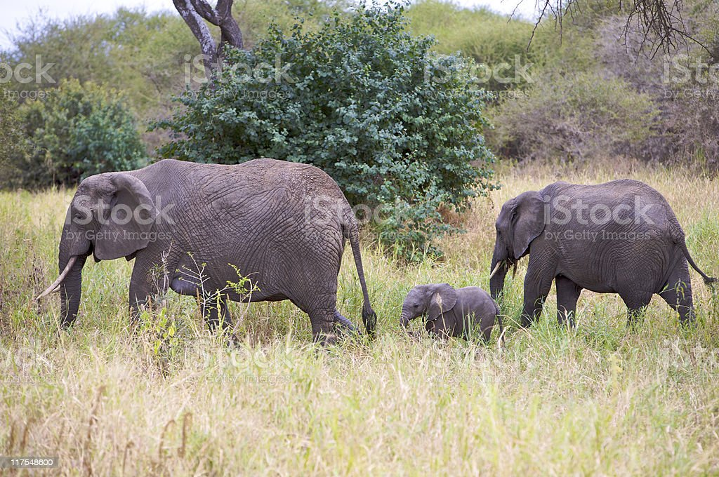 Little elephant and two females stock photo