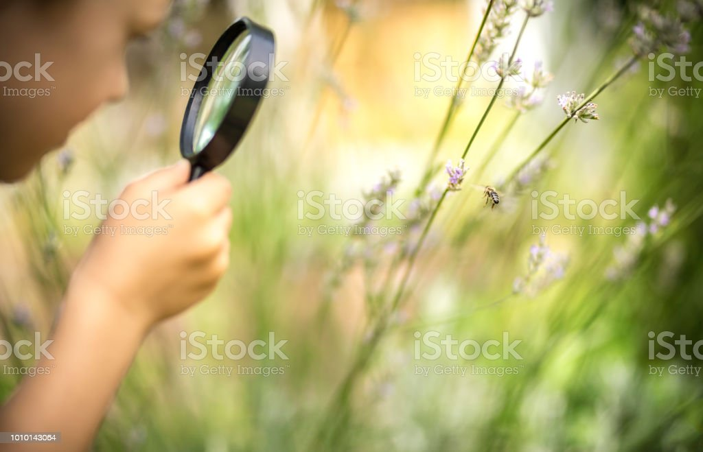 Little explorer observes a honeybee through a magnifying glass stock photo