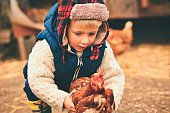 Little boy is holding the hen on the farm