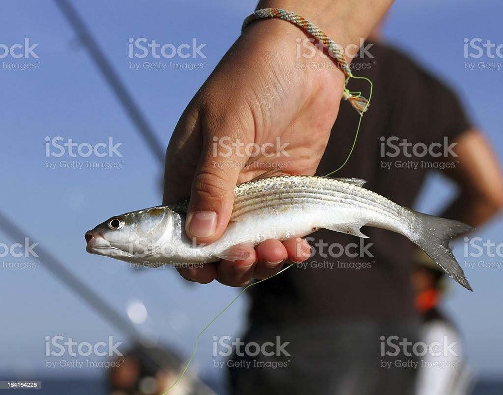 Little fish stock photo