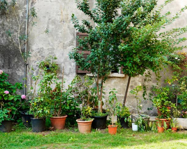 Kleine Blume Garten – Foto