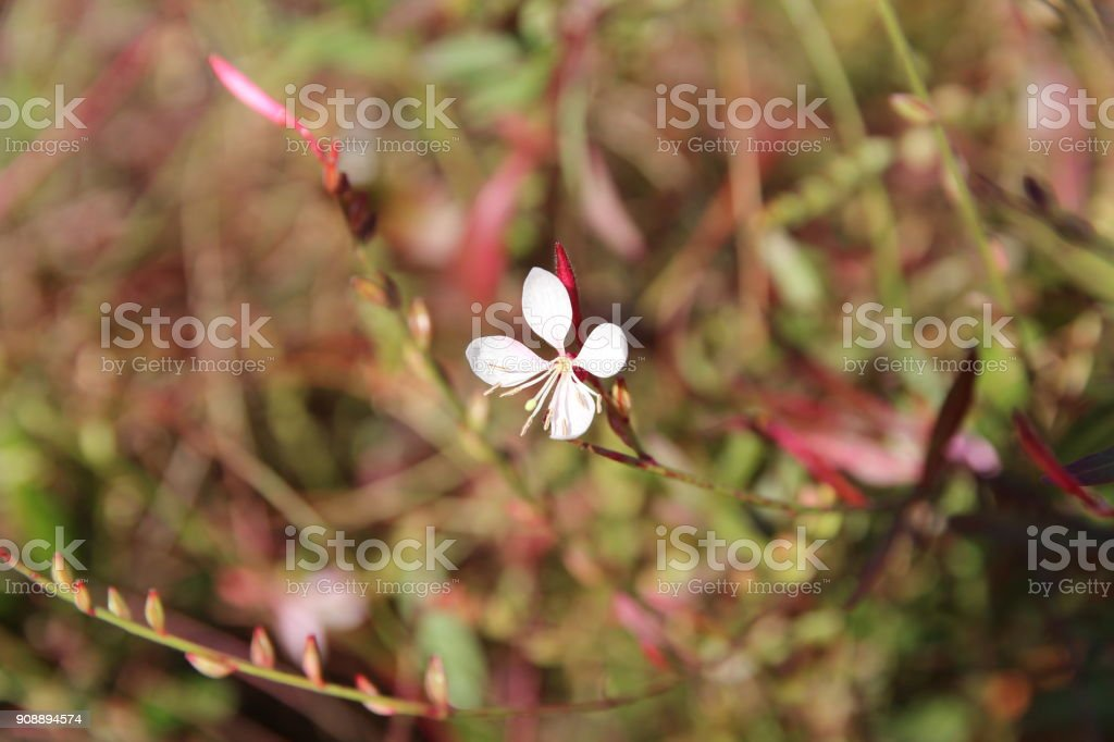Little flower with 4 pinkish petals stock photo