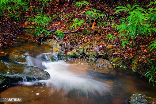 Tiny waterfall in little creek in the rain forest