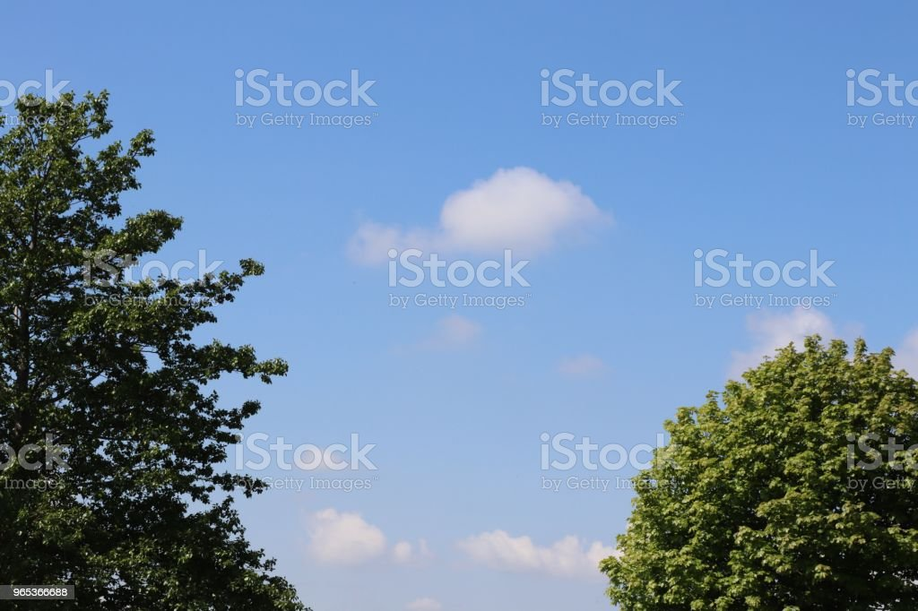 Little fluffy white cloud, against blue sky, with trees in foreground and copy space zbiór zdjęć royalty-free