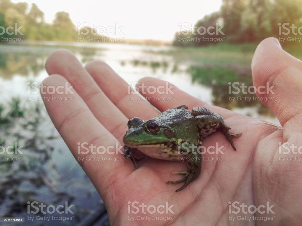 Little frog sitting on the hand stock photo