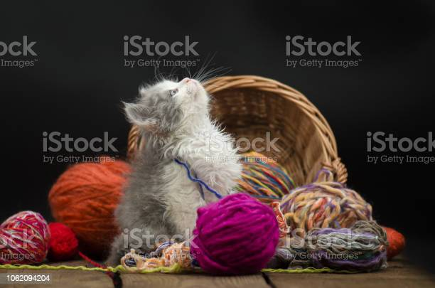 Little funny kitten with a ball of knitting picture id1062094204?b=1&k=6&m=1062094204&s=612x612&h=a3zoklclxrvtpxtuyjbz73r1ndwtjlb2heoiak96ogq=