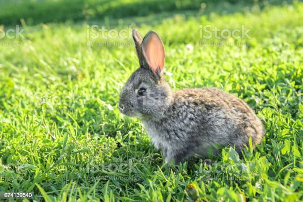 Little funny rabbit running on the field picture id674139540?b=1&k=6&m=674139540&s=612x612&h=2nelfszltqeftcwig9r8cc rp9pts nbkm9vd7djvgy=