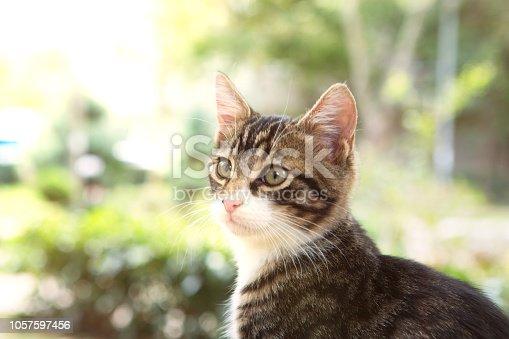 Kitten sitting outdoor.