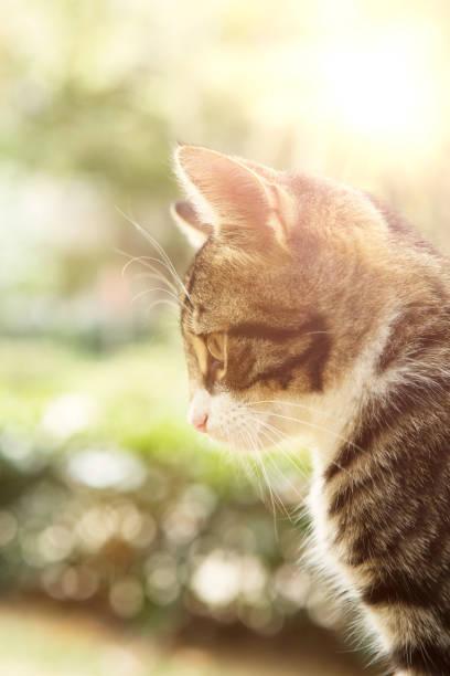 Kleinen pelzigen Kätzchen spielen in Frühlingswiese im öffentlichen park – Foto