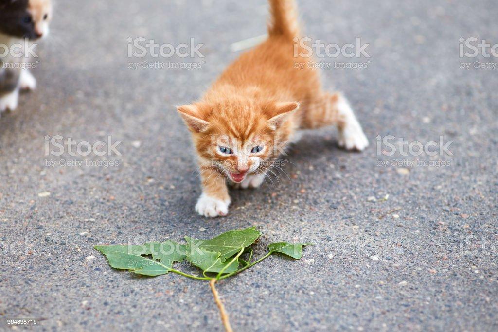 Little ginger kitten on asphalt with green leaves royalty-free stock photo