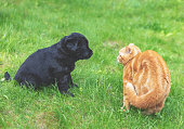 Little ginger kitten playing with little black puppy on the grass in the spring garden