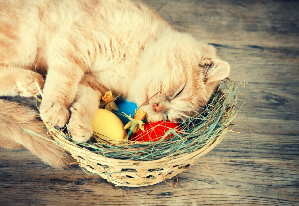 Little ginger kitten sleeping on the basket with colored eggs on picture id670034396?b=1&k=6&m=670034396&s=612x612&w=0&h=hqxvr60gapiydsplakwy8u4euqioa8ijs wppyxfvms=