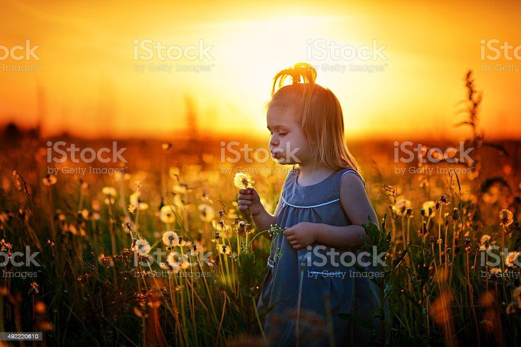 Little girl among dandelions at sunset stock photo