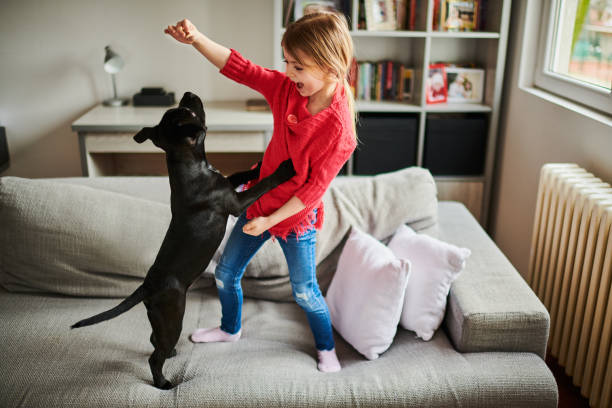 Little girl and black puppy stock photo