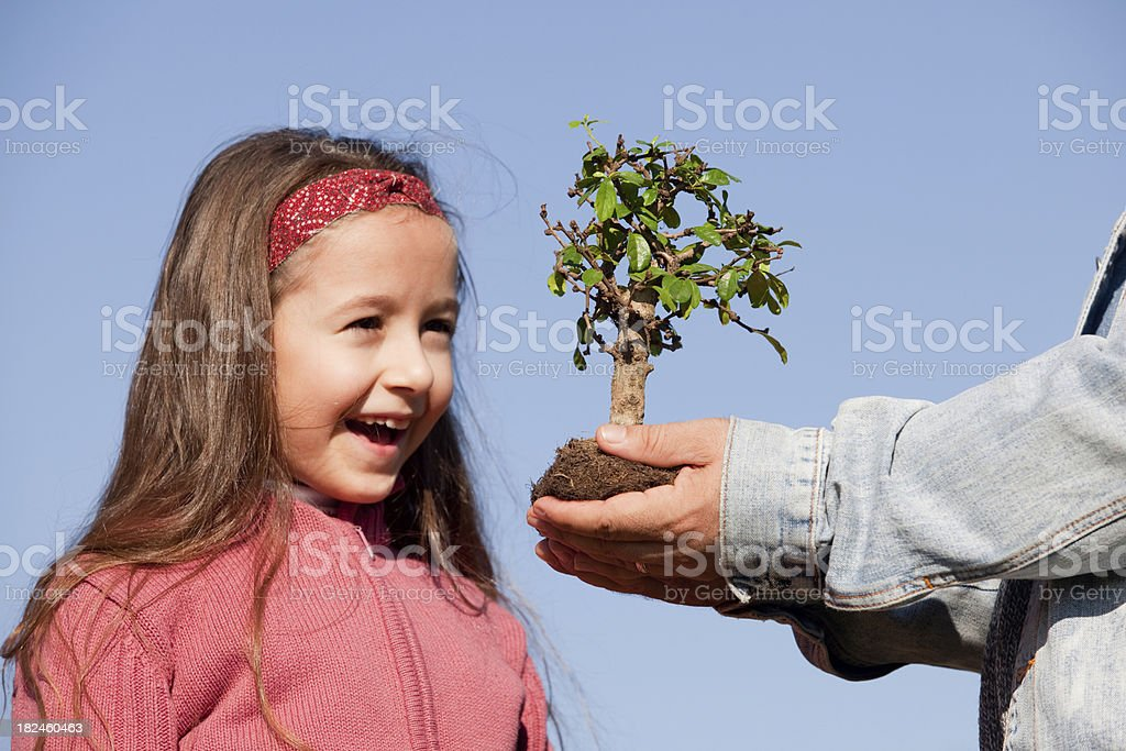 Little girl and bonsai tree royalty-free stock photo