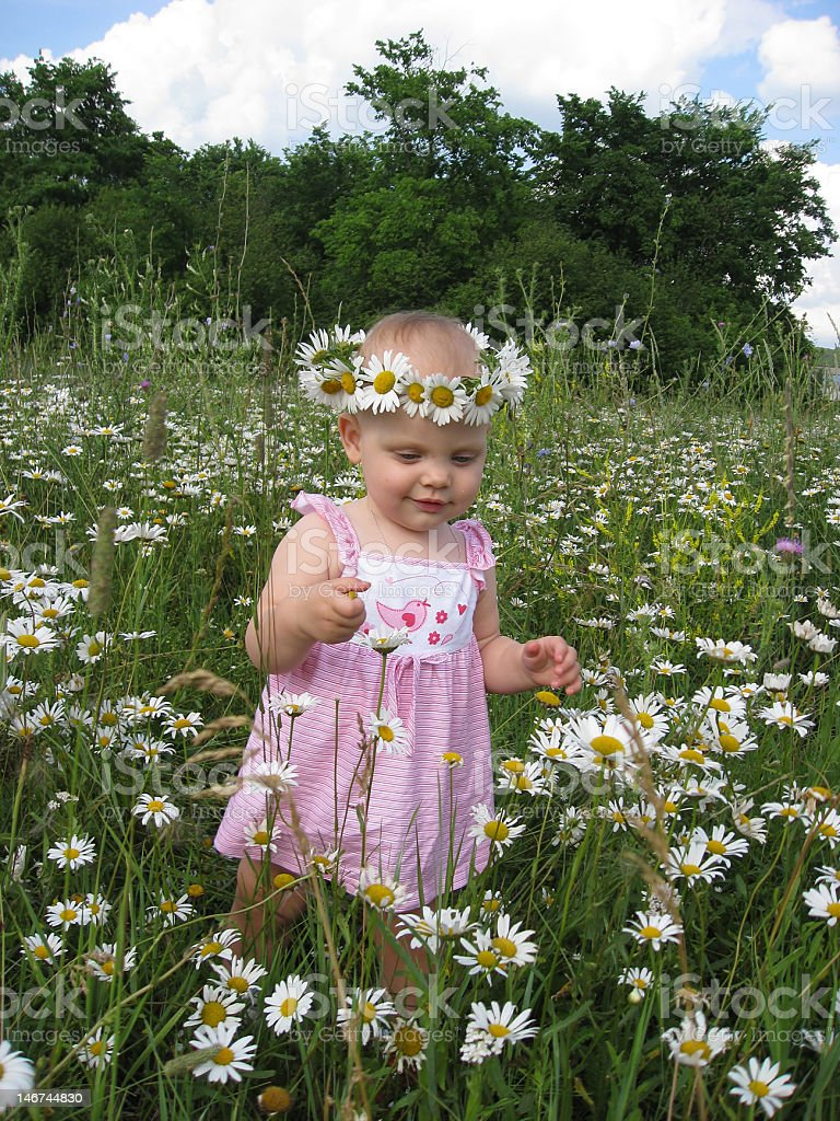 Little girl and camomiles royalty-free stock photo