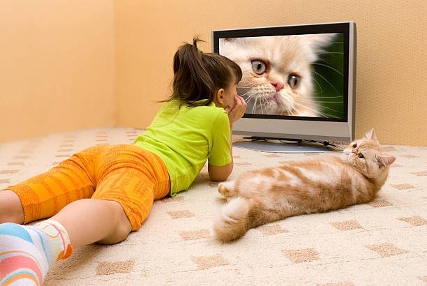 little girl and cat stock photo