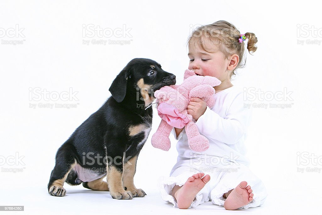 little girl and dog playing with toy royalty-free stock photo