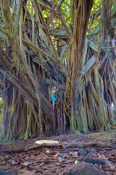 Little girl and giant banyan tree stock photo
