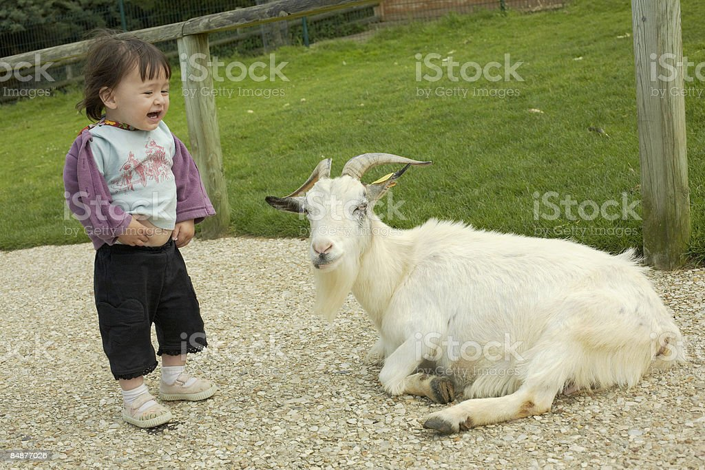 little girl and goat royalty-free stock photo