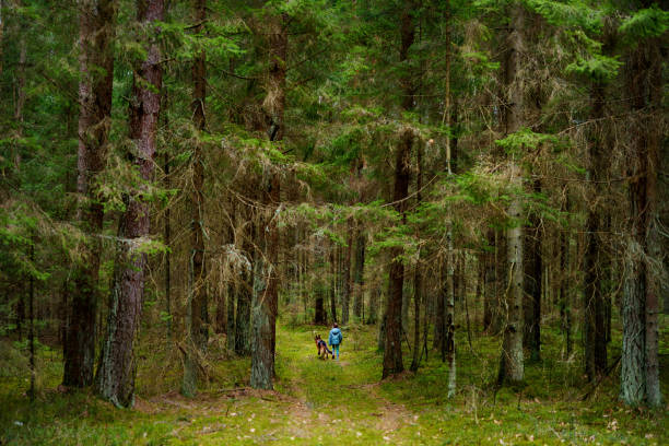 Little girl and her big dog taking a walk in a dark forest stock photo