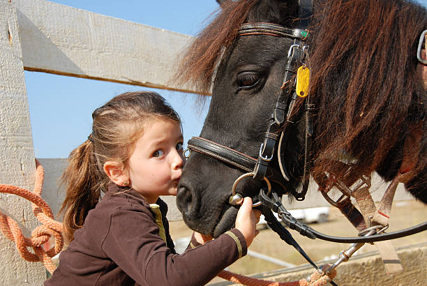 little girl and her pony little girl kissing and her purebred shetland pony pony stock pictures, royalty-free photos & images