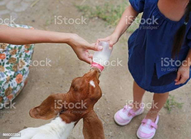 Little girl and mother feeding sheep picture id866007204?b=1&k=6&m=866007204&s=612x612&h=jfazawrvxqtirlna2llc 73zqsu0o2s8oy7dgurnqh4=