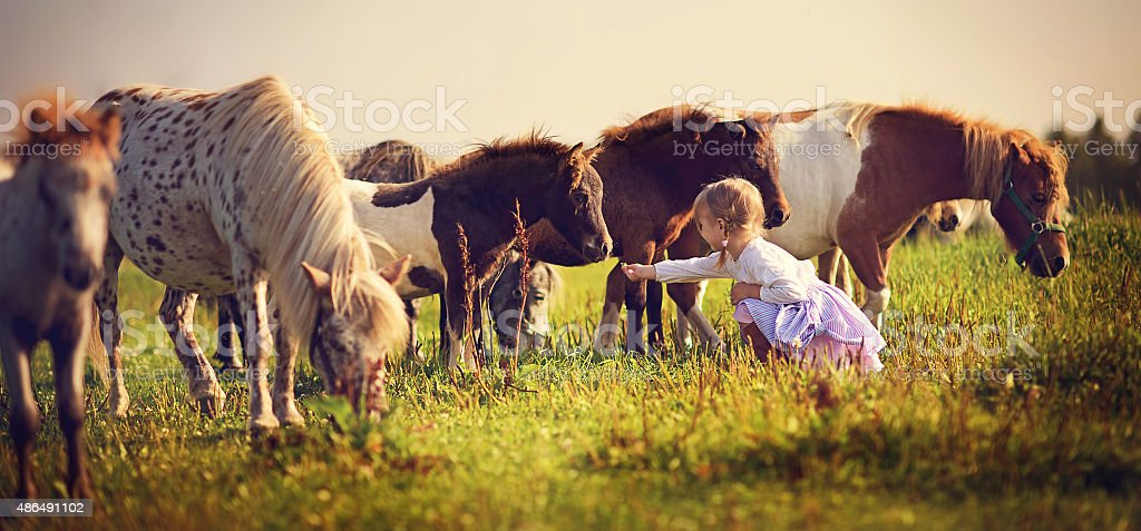 Little girl and ponies stock photo