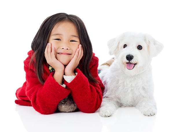 Little girl and white dog stock photo