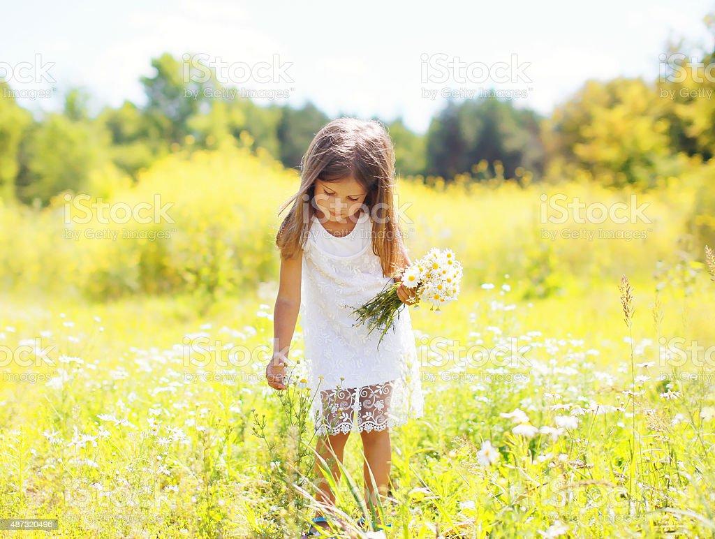 Petite fille enfant sur meadow cueillette chamomiles fleurs sous le soleil - Photo