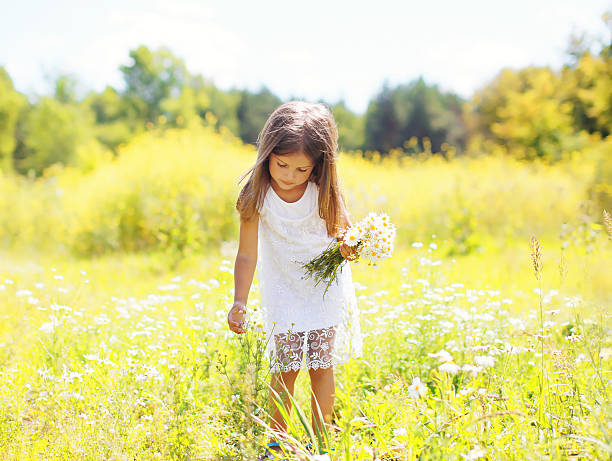 Little girl child on meadow picking chamomiles flowers in sunny stock photo