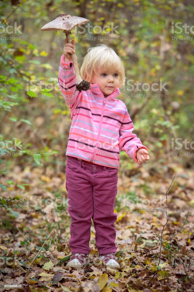 Little girl collecting parasol mushrooms stock photo