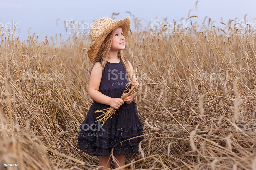 little girl collects in the ears of rye stock photo