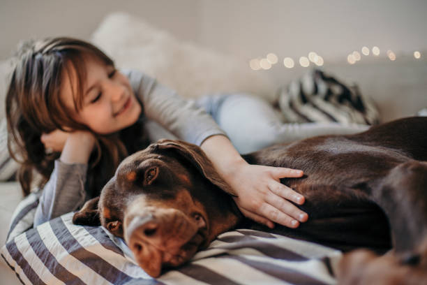 kleines mädchen tun ihrem hund nägel - bester nagellack stock-fotos und bilder