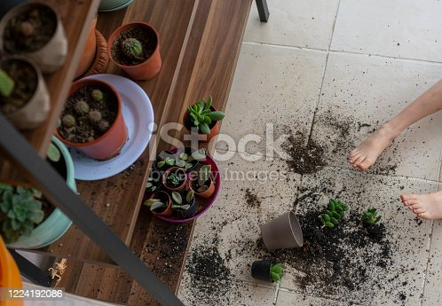 Little girl dropped and broke flower pot with green succulent plant on the kitchen floor