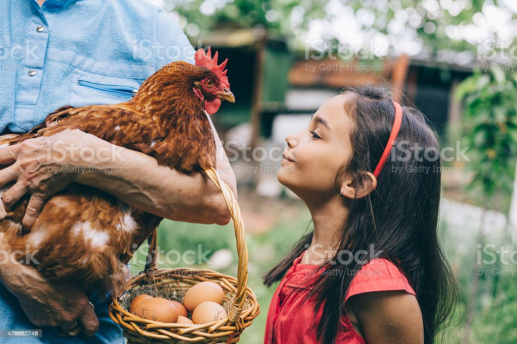 Little girl enjoying a hen stock photo