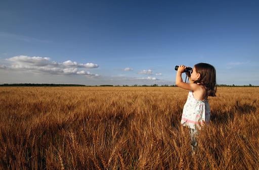 Little girl exploring through a wheat field