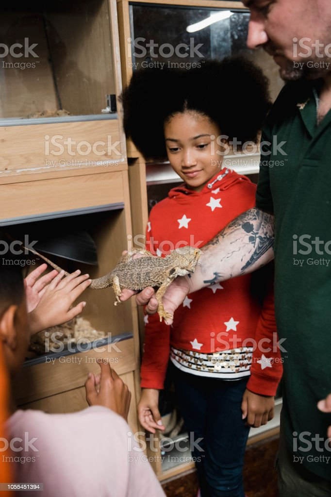 Little Girl Fascinated By The Bearded Dragon Stock Photo