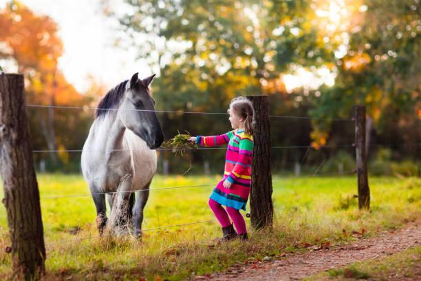 Little girl feeding a horse picture id824816296?b=1&k=6&m=824816296&s=612x612&w=0&h=fl7bffmzfiztp yswyeysjxp3p3dtvkhfyps5sk3aos=