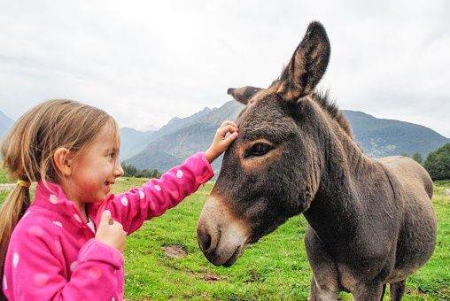Little Girl Feeding Donkey On The Mountain Pasture