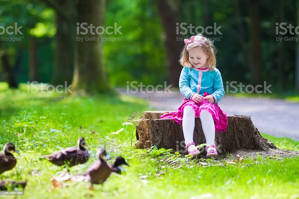 Little girl feeding ducks in a park stock photo