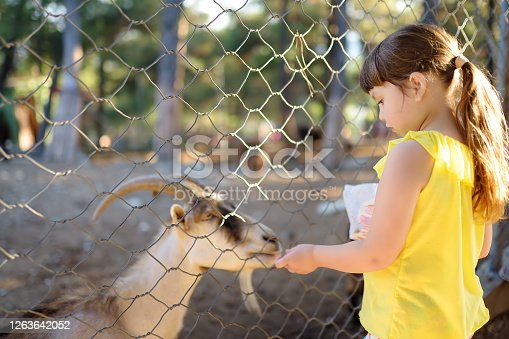 Little girl feeding goat. Child at outdoors petting zoo. Kid having fun in farm with animals. Children and animals. Fun for family with kids on summer school holidays.