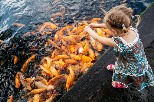 Little girl feeding koi fish in Tirtagangga ponds, Bali