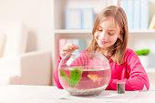 Little girl feeding her goldfish, at home