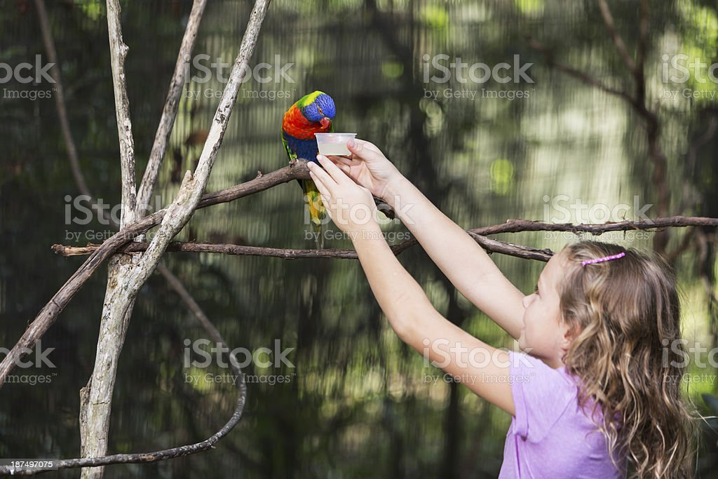 Little girl feeding parrot royalty-free stock photo