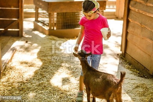 A little girl feeds a goat at a children's petting zoo
