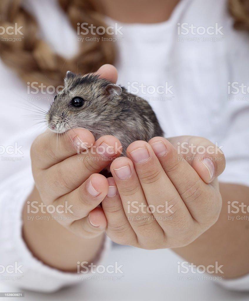 Kleines Mädchen Händen hält hamster – Foto
